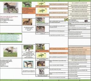 pedigree Antey Betti 1 (2)