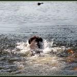 Wasser-Okt-2012-4